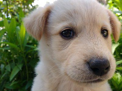 Gezonde puppyvoeding: Geschikte voeding vanaf het begin