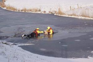 Hond door ijs, baas in water