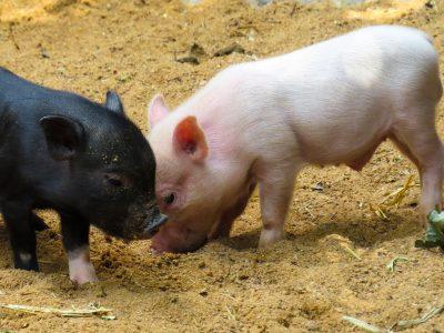 Dierenhandelaar op internet licht mensen op met zieke dieren