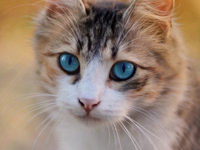 Bewezen: Kat luistert naar naam