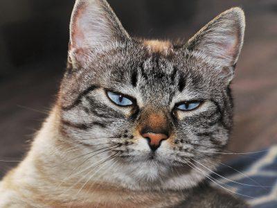 Katten 'kopieren' hun baasjes