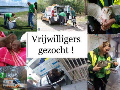 Dierenambulance Midden-limburg zoekt nieuwe vrijwilligers