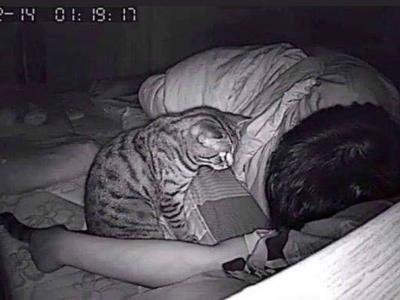 Eigenaar kat droomt telkens dat hij stikt: Verrassende oorzaak.