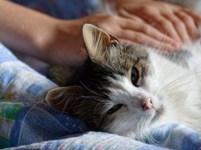 Kat als huisdier gezond