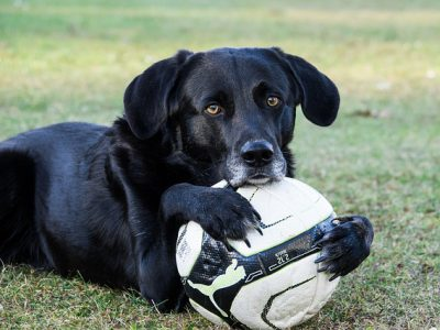 Spelen met je hond leuk en nuttig