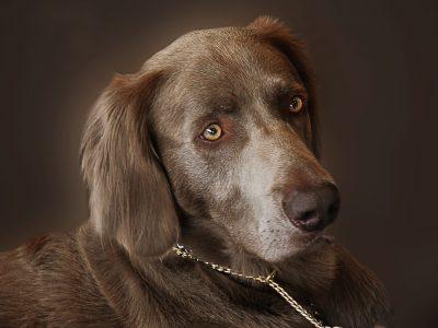 Goede oliën voor honden