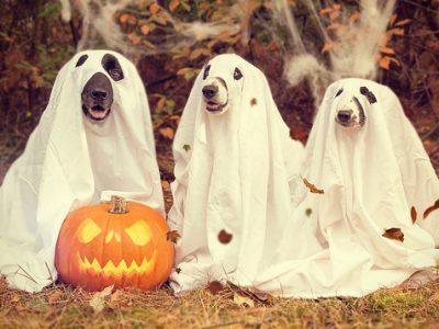 Dieren verkleden voor Halloween niet altijd leuk