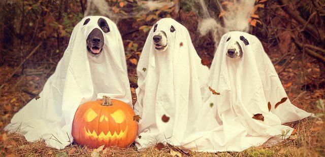 Dieren verkleden voor Halloween niet altijd leuk - Dierwijzer