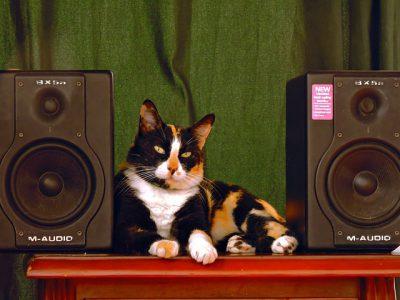 Spotify brengt muziek voor huisdieren