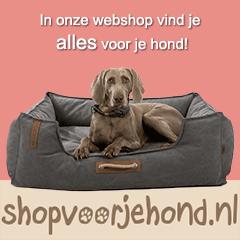 Banner-Shop-voor-je-Hond-240-x-240-