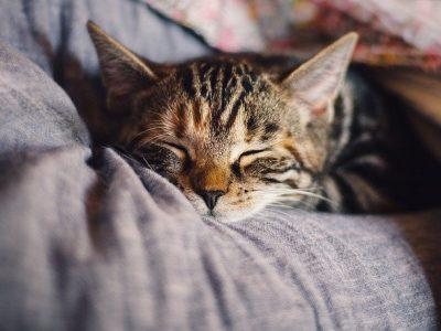 Steeds meer Kattencafés in Nederland