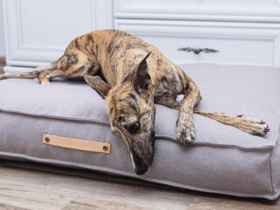 Hoe maak je jouw huis tot een prettig thuis voor je nieuwe huisdier en voor jezelf?