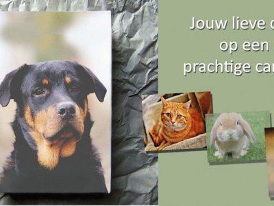 Win jouw dier op canvas