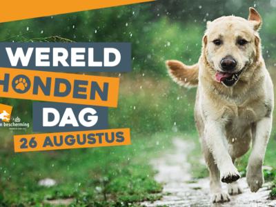 26 augustus: Wereld Hondendag