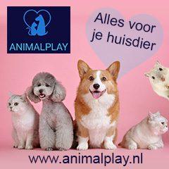 Banner-AnimalPlay
